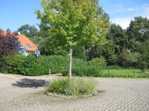 Sendenhorst 3