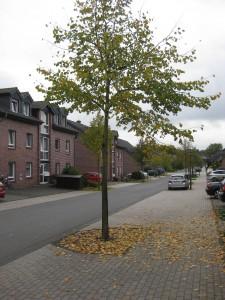 Xanten Karl-Leisner-Straße 3