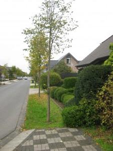 Xanten Karl-Leisner-Straße 5