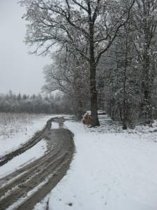 Planegg Karl-Leisner-Weg 10