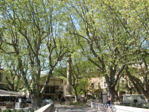 Petrarca-Säule auf dem Dorfplatz