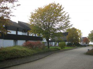 simmern-priesterhaus-berg-moriah-1
