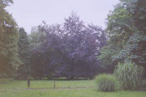 Festwiese